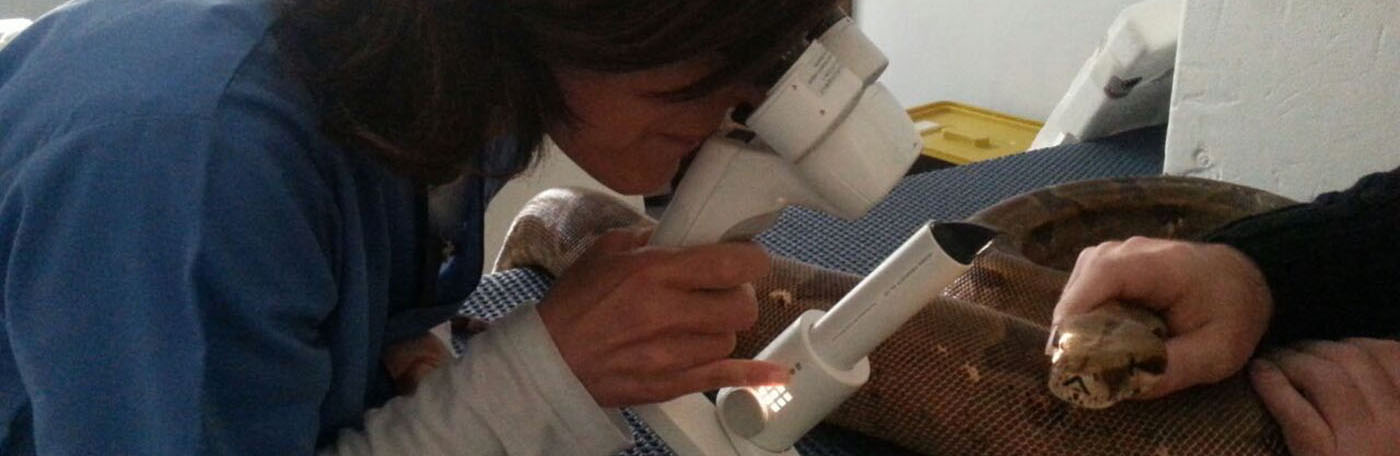 Oculistica Veterinaria Torino Genova